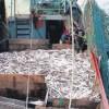 Establecen el manejo de la pesquería de caballa