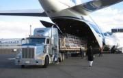 IATA – Análisis del mercado de carga aéreaa noviembre de 2020