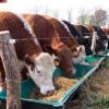 Argentina realizó el primer embarque de carne bovina bajo la cuota Feedlot a la Unión Europea