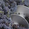 Uruguay exportó 4,6 millones de litros de vino embotellado este año