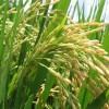 Santa Fe: Henn participó de la puesta en marcha de la secadora de arroz del Puerto de Santa Fe