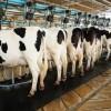 Brasil levantó restricciones a colocación de productos lácteos uruguayos