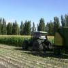 Chubut: CORFO brindó apoyo a productores de Sarmiento en nueva cosecha de maíz