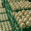 EE. UU abrió su mercado a la importación de huevos