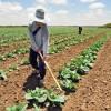 BRASIL: La agricultura orgánica debe generar R $ 2,5 mil millones en 2016