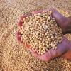 Aumentó 13,4% la molienda de oleaginosas en los primeros siete meses del año