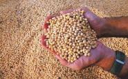 Cinco empresas concentraron 65% de las exportaciones de granos en el primer semestre