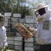 Argentina será sede del mayor encuentro de la apicultura orgánica en el mundo