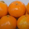 Uruguay se prepara para exportar mandarinas, arándanos, maíz, cebada y miel a China