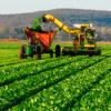 Uruguay XXI prevé para este año aumento de exportaciones de carne bovina, lácteos, arroz y soja