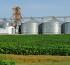 El 80 % de la soja uruguaya es destinada a China, mercado que paga mejor que Europa