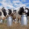 La Argentina vuelve a integrar la Federación Internacional de Lechería