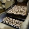 Abren registro de cuota de maní, pasta de maní y tabaco a Estados Unidos