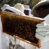 Desde Turquía la apicultura argentina se muestra al mundo