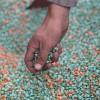 Incrementan el control en la importación de fitosanitarios