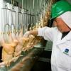 México habilitó siete nuevos establecimientos para la exportación avícola