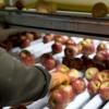 Nuevos horizontes comerciales para los alimentos argentinos en el sur de Brasil