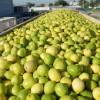 Argentina vuelve a exportar limones a Japón