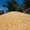 Las exportaciones de maíz crecieron más del 19% en valor