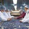 China confirma la apertura del mercado de arándanos frescos