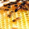 Avanza proyecto para facilitar la exportación de productos apícolas