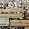 Brasil abrió el proceso de renovación de la tasa antidumping al ajo chino