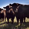 La Argentina exportará semen bovino y bubalino congelado a Pakistán