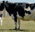 Uruguay: Fondo de Emergencia Agropecuaria aporta hasta 20.000 dólares a productores afectados por factores climáticos
