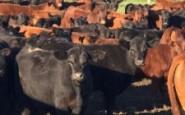 Exportación de carne vacuna a China – Interesante mercado que debe cuidarse