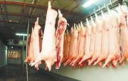 Récord de exportaciones de carne de cerdo