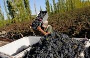 Las exportaciones de vinos crecieron más del 46% entre enero y julio