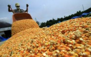La Pampa exportó más de 5 mil ton de granos con certificación fitosanitaria electrónica