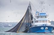OMC – La pesca en el Día de los Océanos
