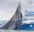 El sector pesquero exportó por más de US$ 1.000 en los primeros siete meses del año