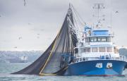 Argentina reclamó en la OMC por un acuerdo para la eliminación de los subsidios a la pesca
