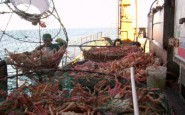 El INIDEP y el IFOP chileno planifican nuevas líneas de trabajo sobre pesquería de centolla