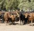 Nuevos buscadores en línea para el comercio exterior de animales y material reproductivo