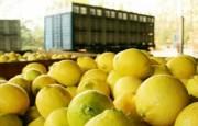 Las exportaciones de frutas frescas crecieron un 6 % en relación al 2019